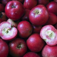 Apples rosette