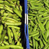 Bean broad pea pods