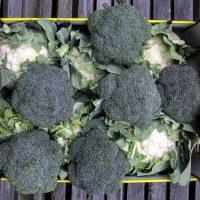 Broccoli cauli