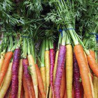 Carrot heritage