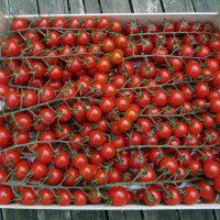 Cherry tomatoes vine