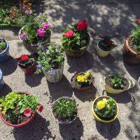 Filled pots