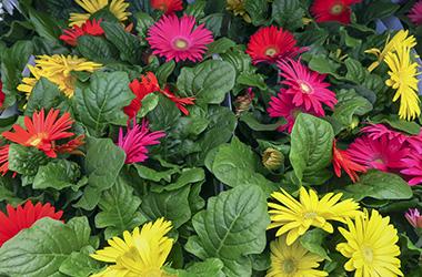 Plants abd flowers