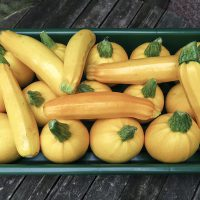 Yellow courgettes